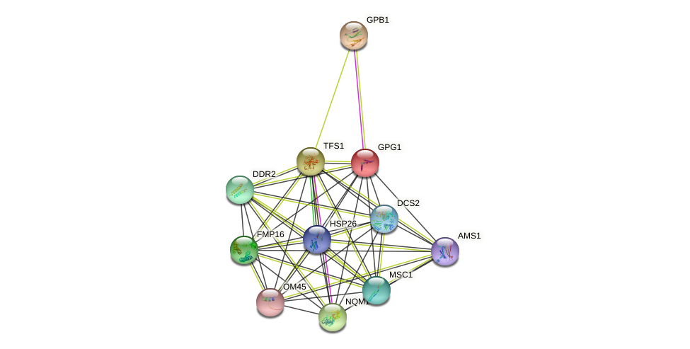 GPG1 protein (Saccharomyces cerevisiae) - STRING interaction network