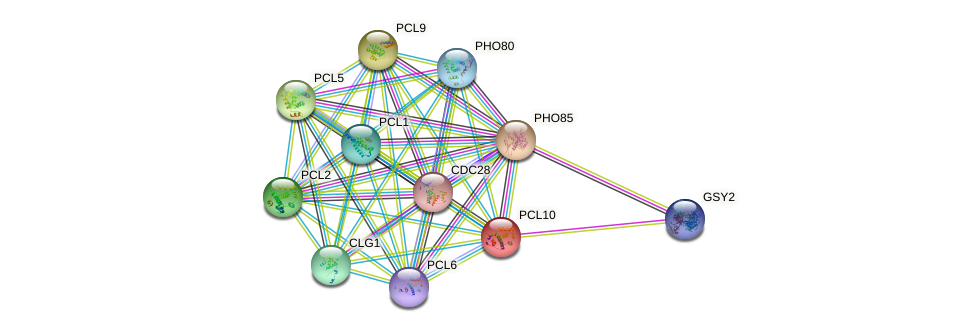 PCL10 protein (Saccharomyces cerevisiae) - STRING interaction network