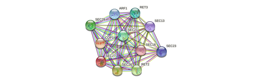 SEC27 protein (Saccharomyces cerevisiae) - STRING interaction network