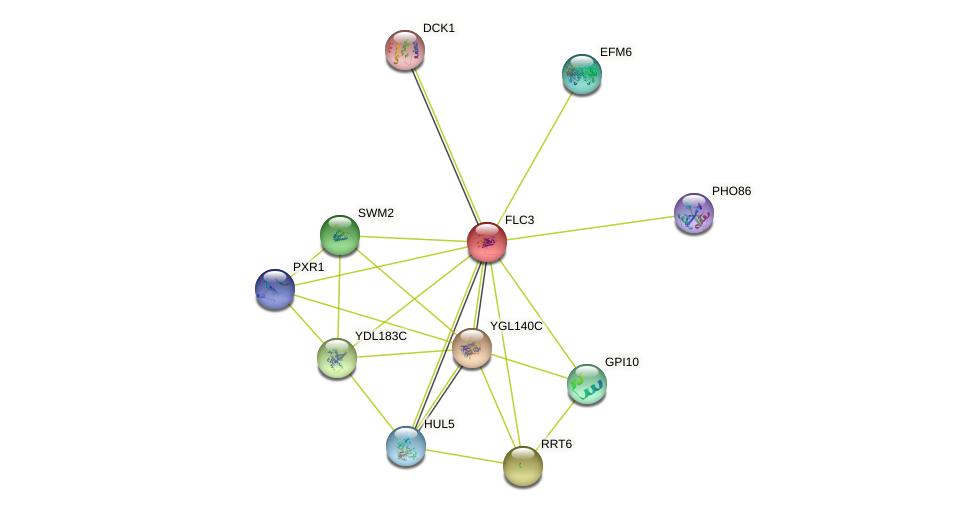 FLC3 protein (Saccharomyces cerevisiae) - STRING interaction network