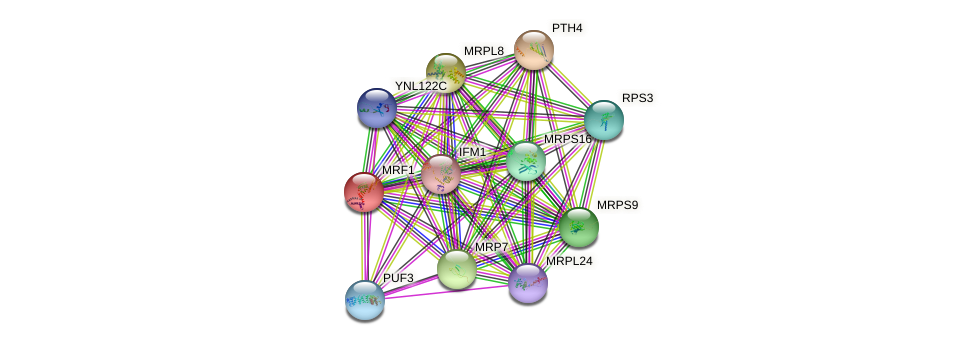 MRF1 protein (Saccharomyces cerevisiae) - STRING interaction network