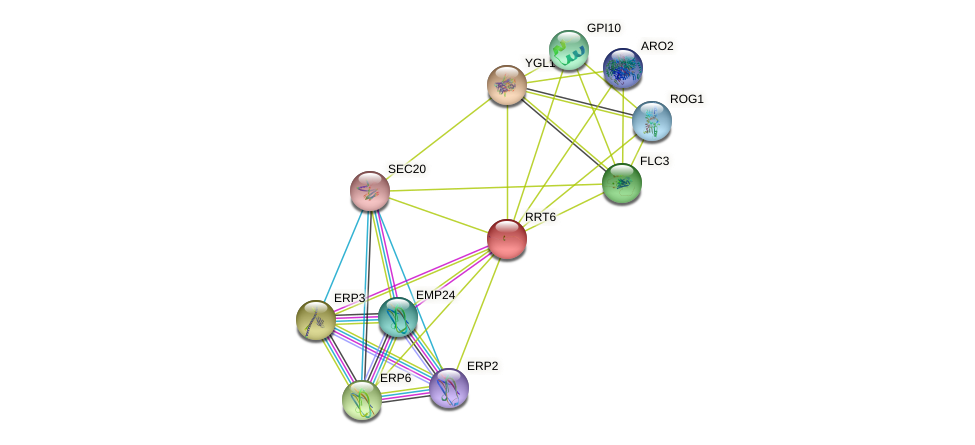RRT6 protein (Saccharomyces cerevisiae) - STRING interaction network
