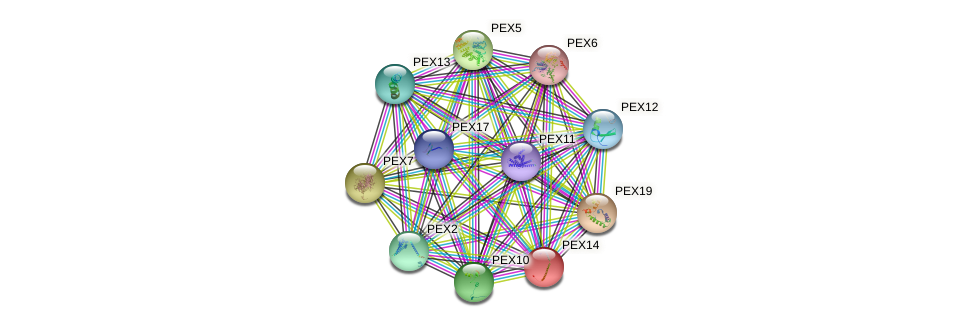 PEX14 protein (Saccharomyces cerevisiae) - STRING interaction network