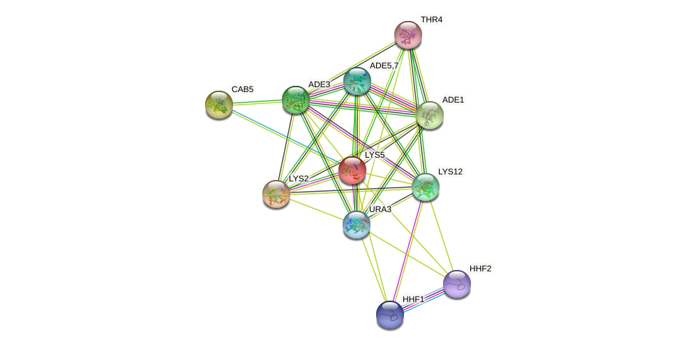 LYS5 protein (Saccharomyces cerevisiae) - STRING interaction network