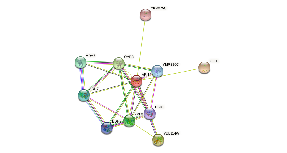 ARI1 protein (Saccharomyces cerevisiae) - STRING interaction network
