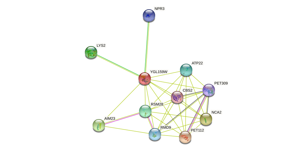 YGL159W protein (Saccharomyces cerevisiae) - STRING interaction network