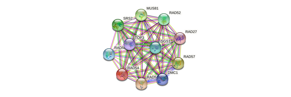 RAD54 protein (Saccharomyces cerevisiae) - STRING interaction network