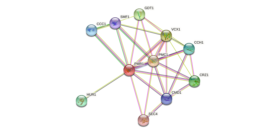 PMR1 protein (Saccharomyces cerevisiae) - STRING interaction network