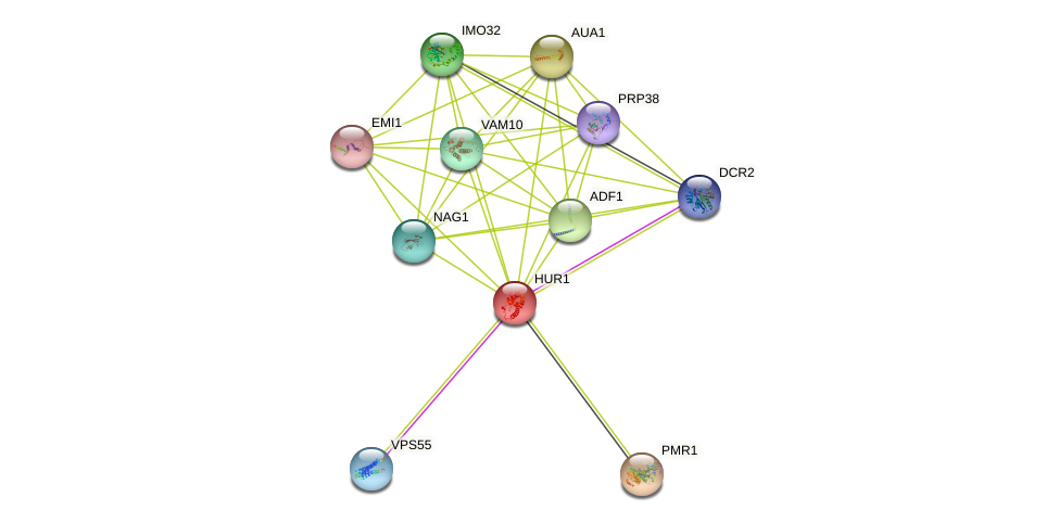 HUR1 protein (Saccharomyces cerevisiae) - STRING interaction network