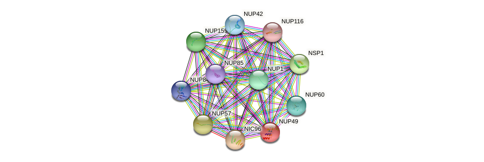NUP49 protein (Saccharomyces cerevisiae) - STRING interaction network