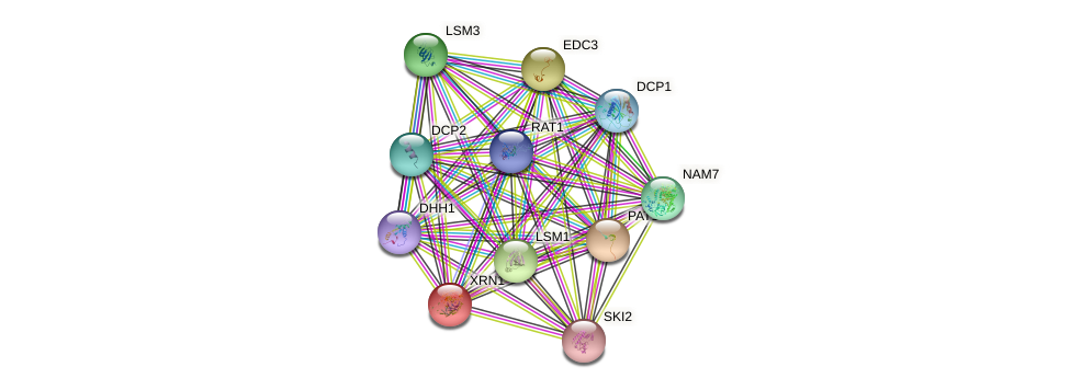 XRN1 protein (Saccharomyces cerevisiae) - STRING interaction network