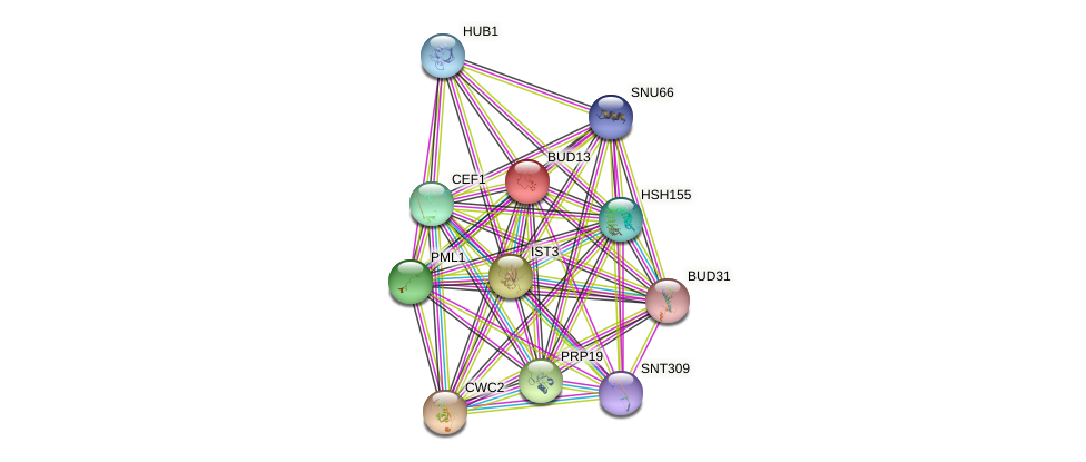 BUD13 protein (Saccharomyces cerevisiae) - STRING interaction network
