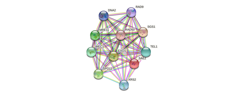 SAE2 protein (Saccharomyces cerevisiae) - STRING interaction network