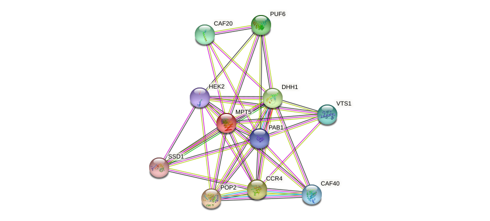 MPT5 protein (Saccharomyces cerevisiae) - STRING interaction network