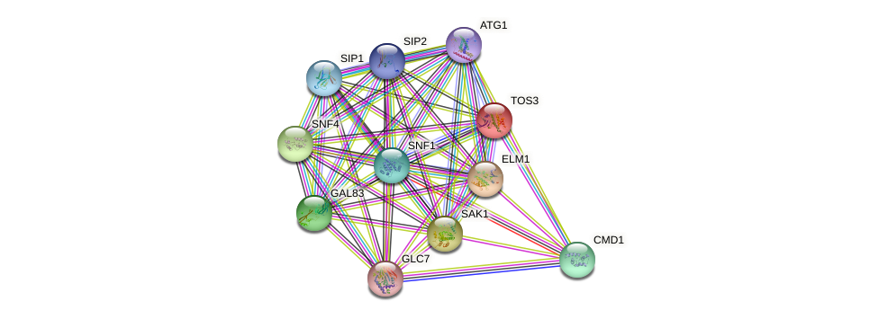 TOS3 protein (Saccharomyces cerevisiae) - STRING interaction network