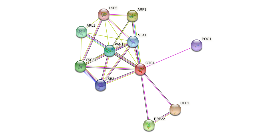 GTS1 protein (Saccharomyces cerevisiae) - STRING interaction network