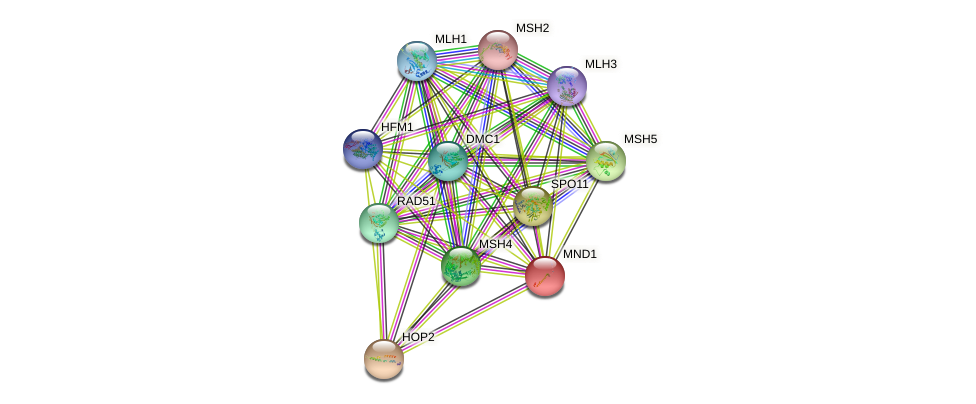 MND1 protein (Saccharomyces cerevisiae) - STRING interaction network