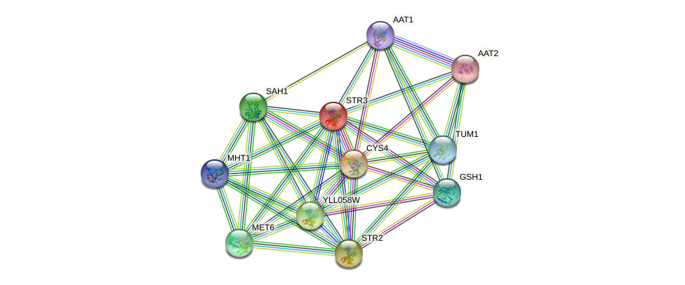 STR3 protein (Saccharomyces cerevisiae) - STRING interaction network