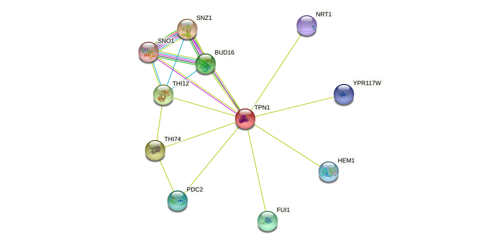 TPN1 protein (Saccharomyces cerevisiae) - STRING interaction network