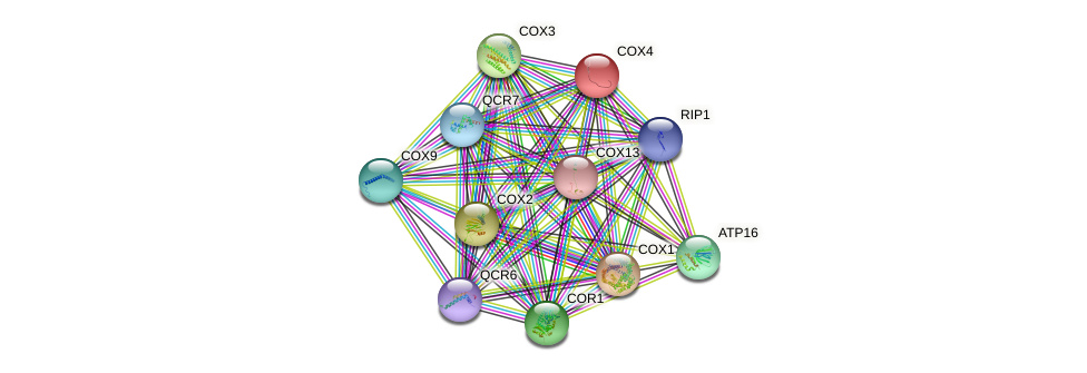 COX4 protein (Saccharomyces cerevisiae) - STRING interaction network
