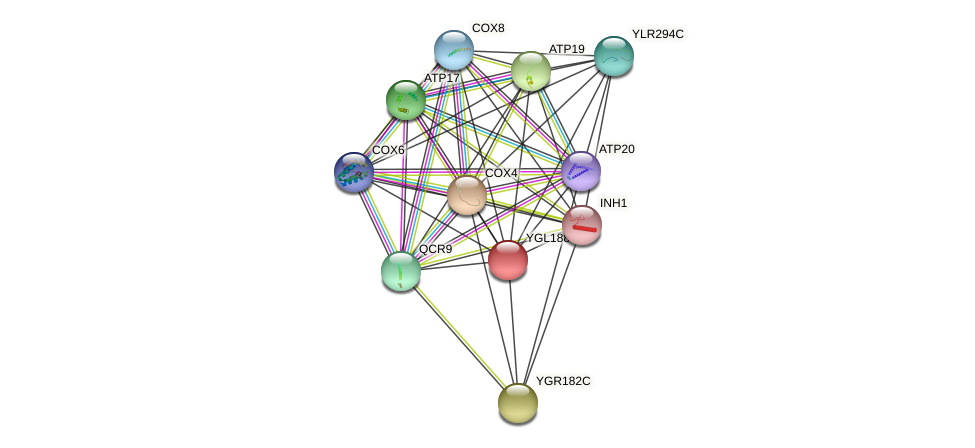 YGL188C protein (Saccharomyces cerevisiae) - STRING interaction network