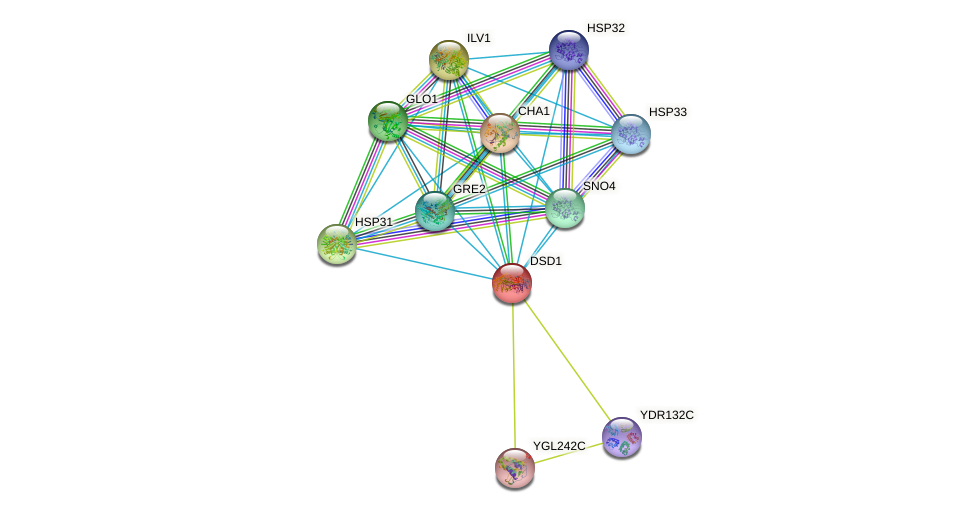 DSD1 protein (Saccharomyces cerevisiae) - STRING interaction network
