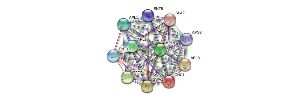 CHC1 protein (Saccharomyces cerevisiae) - STRING interaction network