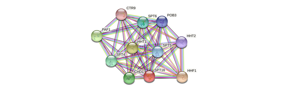 SPT16 protein (Saccharomyces cerevisiae) - STRING interaction network