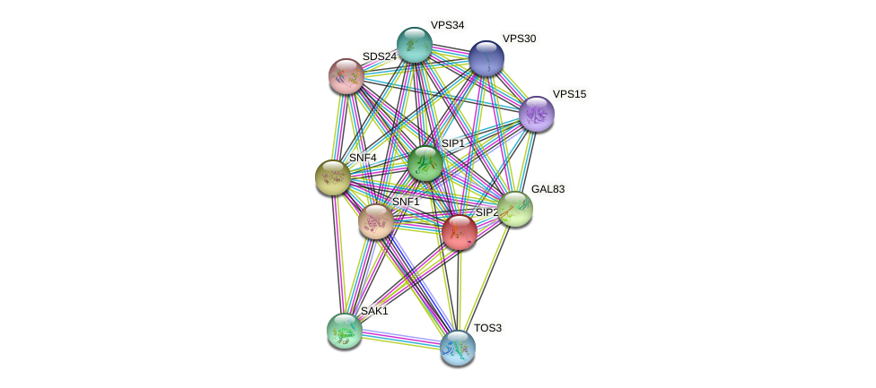 SIP2 protein (Saccharomyces cerevisiae) - STRING interaction network