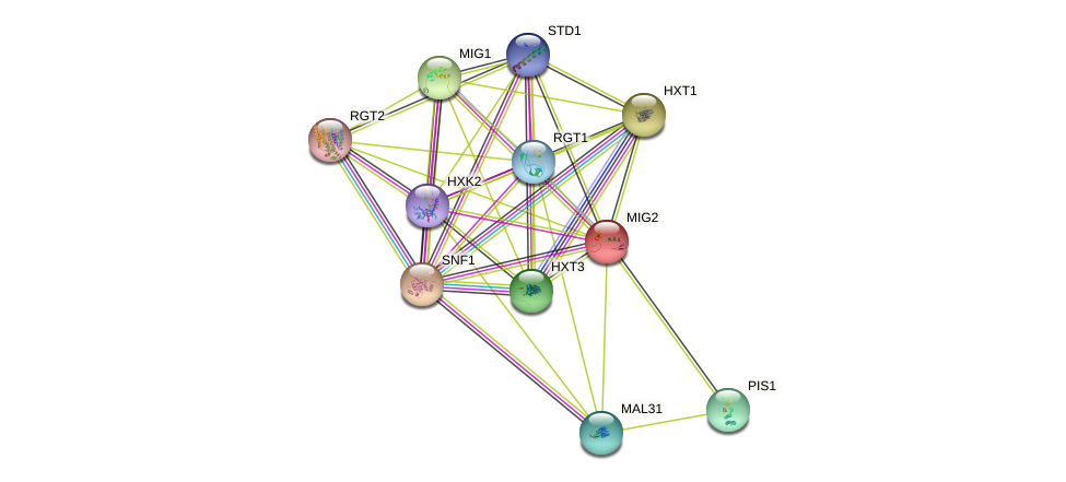 MIG2 protein (Saccharomyces cerevisiae) - STRING interaction network