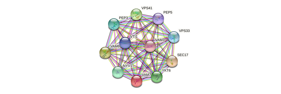 VAM7 protein (Saccharomyces cerevisiae) - STRING interaction network