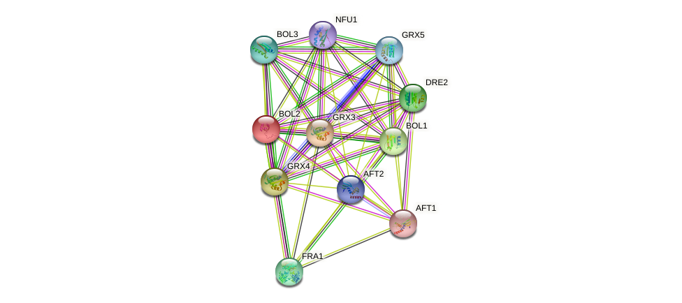 FRA2 protein (Saccharomyces cerevisiae) - STRING interaction network