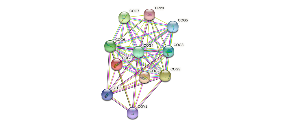 COG1 protein (Saccharomyces cerevisiae) - STRING interaction network