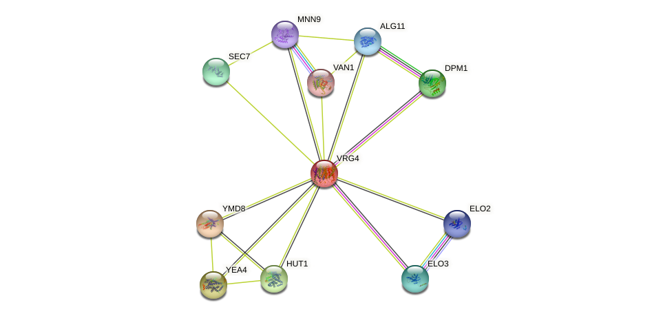 VRG4 protein (Saccharomyces cerevisiae) - STRING interaction network