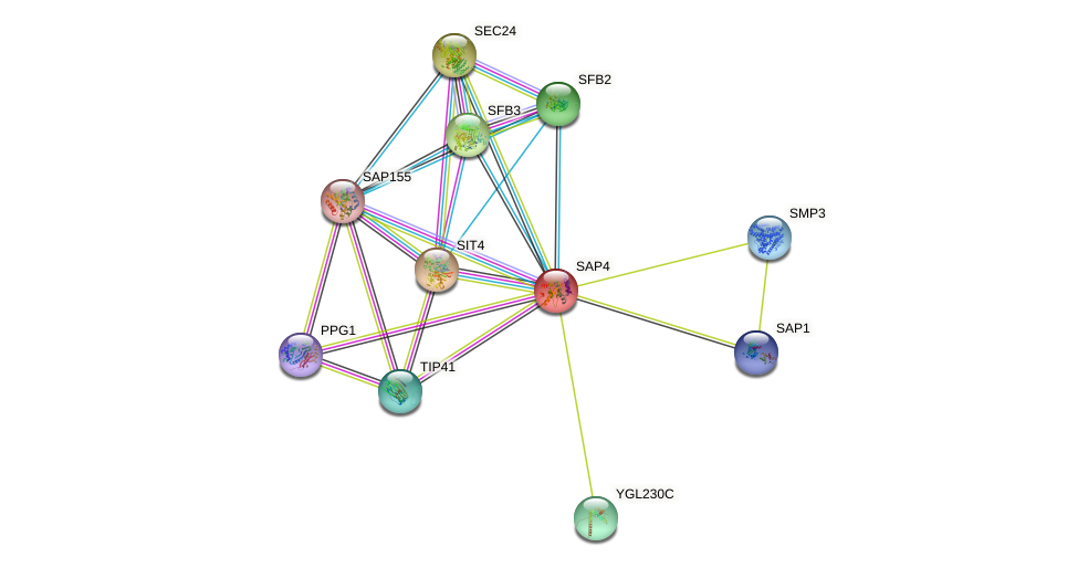 SAP4 protein (Saccharomyces cerevisiae) - STRING interaction network