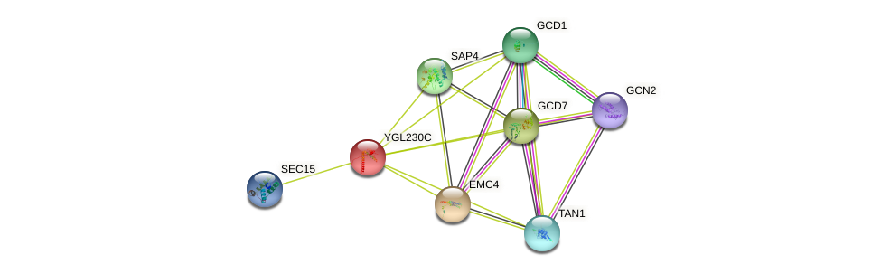 YGL230C protein (Saccharomyces cerevisiae) - STRING interaction network