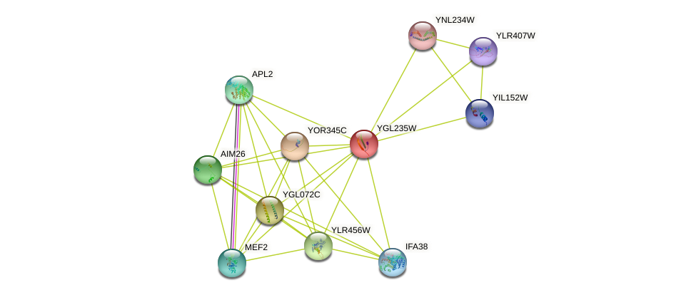 YGL235W protein (Saccharomyces cerevisiae) - STRING interaction network