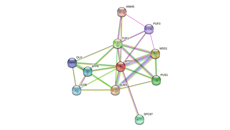 MTO1 protein (Saccharomyces cerevisiae) - STRING interaction network