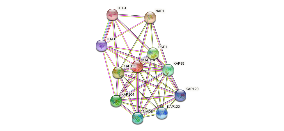 KAP114 protein (Saccharomyces cerevisiae) - STRING interaction network