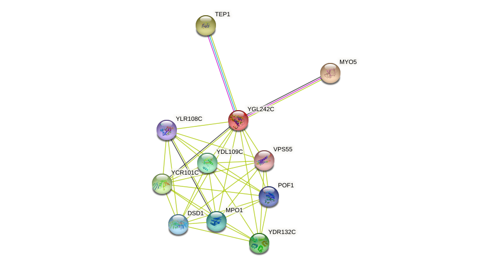 YGL242C protein (Saccharomyces cerevisiae) - STRING interaction network