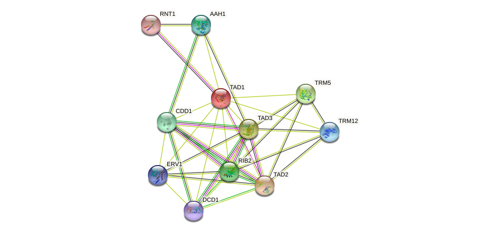 TAD1 protein (Saccharomyces cerevisiae) - STRING interaction network