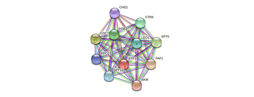 RTF1 protein (Saccharomyces cerevisiae) - STRING interaction network