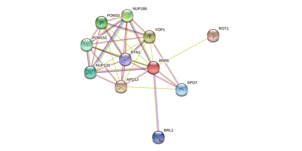 BRR6 protein (Saccharomyces cerevisiae) - STRING interaction network