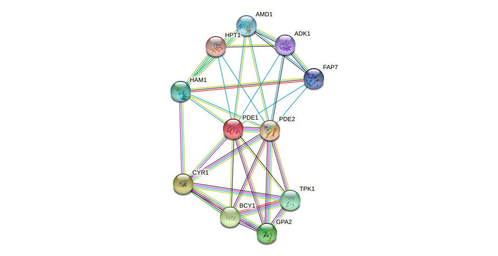 PDE1 protein (Saccharomyces cerevisiae) - STRING interaction network