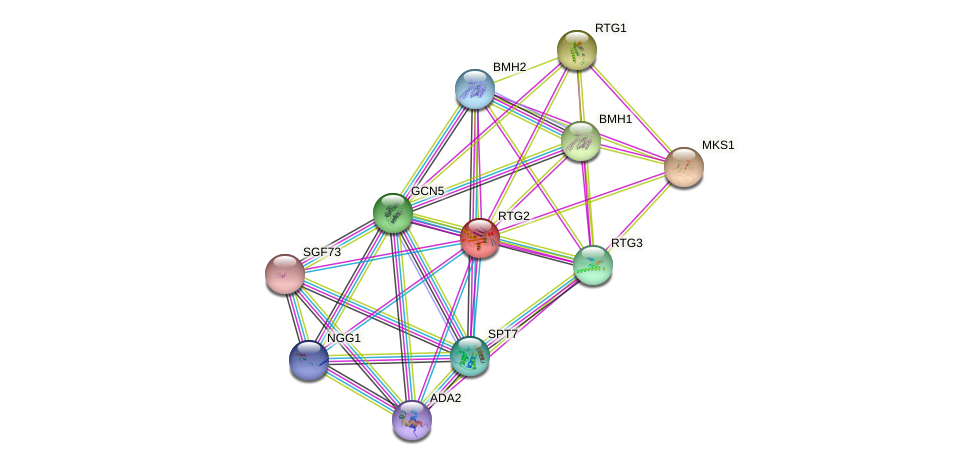 RTG2 protein (Saccharomyces cerevisiae) - STRING interaction network