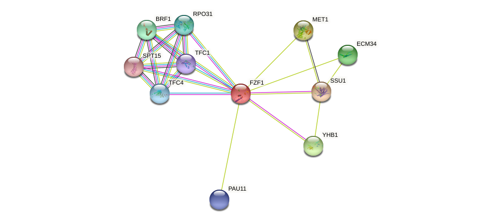 FZF1 protein (Saccharomyces cerevisiae) - STRING interaction network