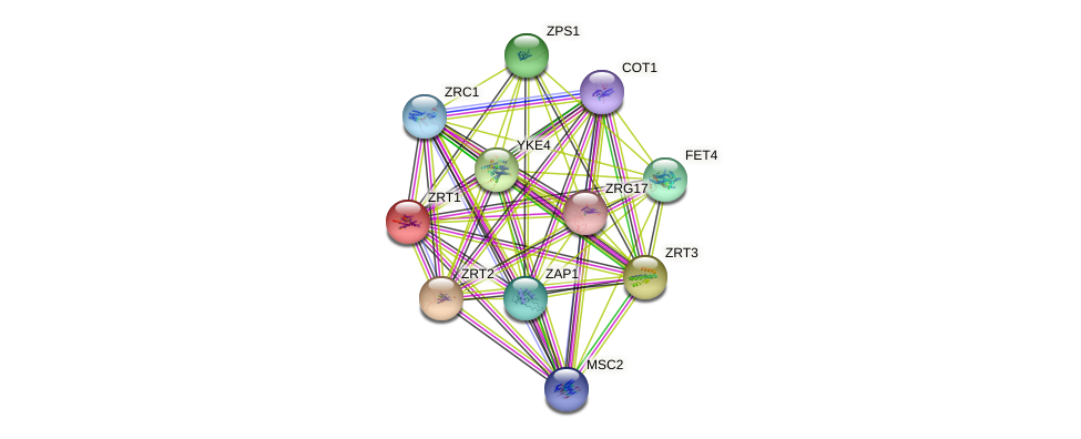 ZRT1 protein (Saccharomyces cerevisiae) - STRING interaction network