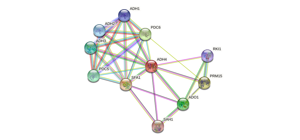 ADH4 protein (Saccharomyces cerevisiae) - STRING interaction network