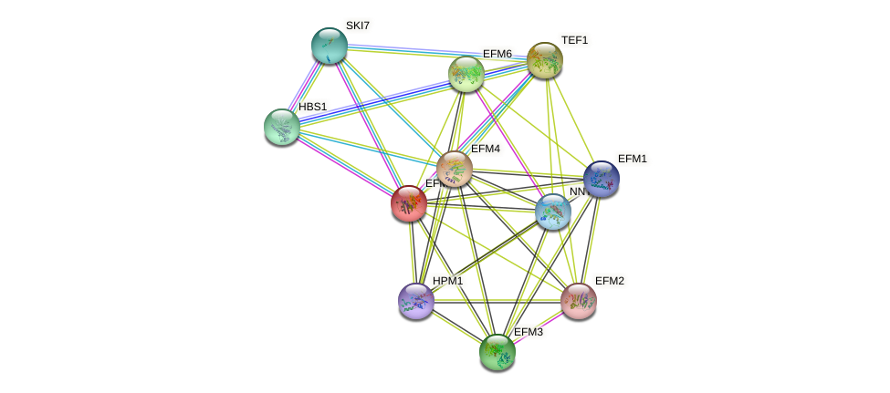 EFM5 protein (Saccharomyces cerevisiae) - STRING interaction network