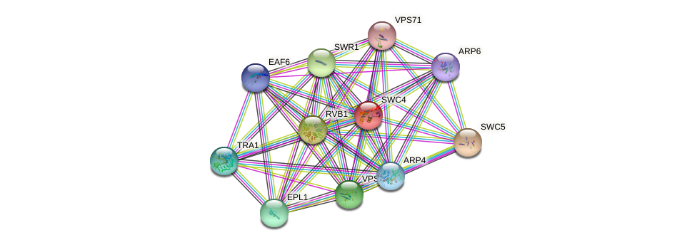 SWC4 protein (Saccharomyces cerevisiae) - STRING interaction network
